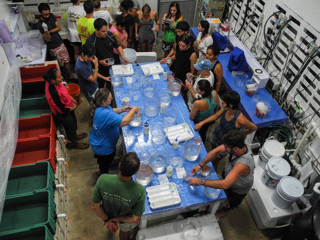 labwork during spawning night at UNAM (Paul Selvaggio)