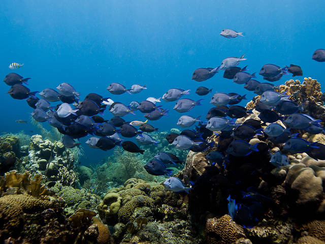 Reef site in the waters of Curaçao (Paul Selvaggio)