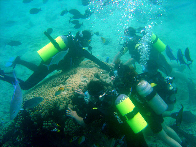 divers hold on to coral (Dave Burdick)