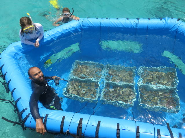 Testing the next generation of Coral Rearing In-Situ Basin (CRIB), with Aric Bickel, SECORE's operations manager (Valeria Pizarr