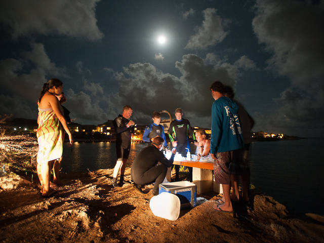 Coral spawning night shift in Curaçao (Paul Selvaggio)