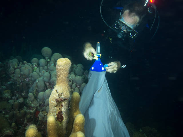 Mike Brittsan, Columbus Zoo and Aquarium, collecting coral spawn, Curacao 2016, Paul Selvaggio