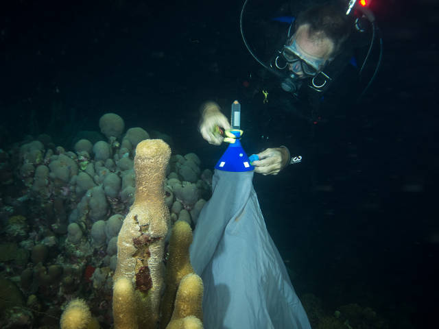 Mike Brittsan, Columbus Zoo and Aquarium and SECORE directors board, collecting coral spawn (Paul Selvaggio)